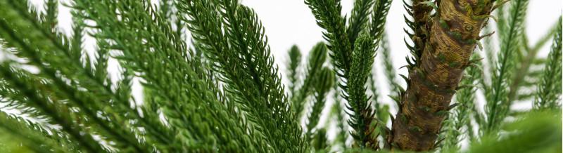branches et bambous
